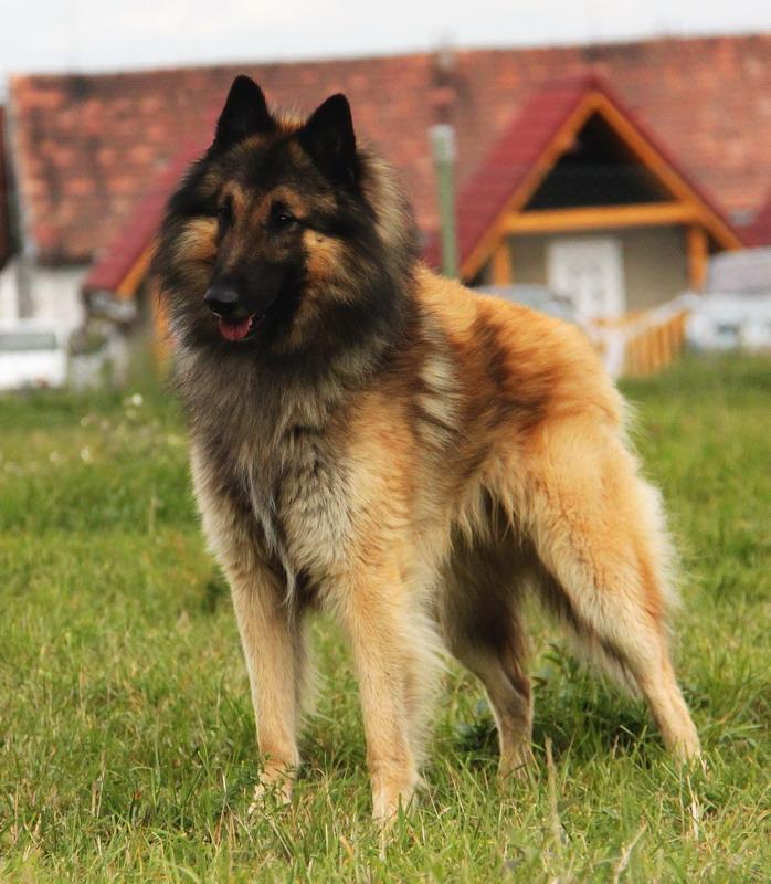 Ivanhoe z Kovárny